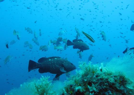 I pesci e le rocce parlano e cantano. La scoperta nel parco marino di #Tavolara.